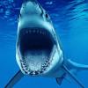 Shark Week adds VR content