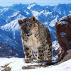 Planet Earth II tops iPlayer requests