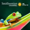 Layer3 launches Smithsonian Channel 4K VoD